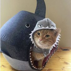 Shark Cat Ball as seen in the NY Times, Seattle Times, and Huffington Post